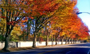 Grinstead Drive is beautiful in the fall!