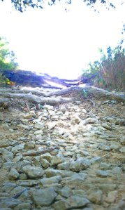 Cherokee Park Trail